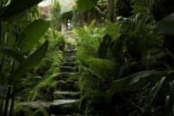 Stone stairs going up in the garden of Finca Dracula natural touristic attraction