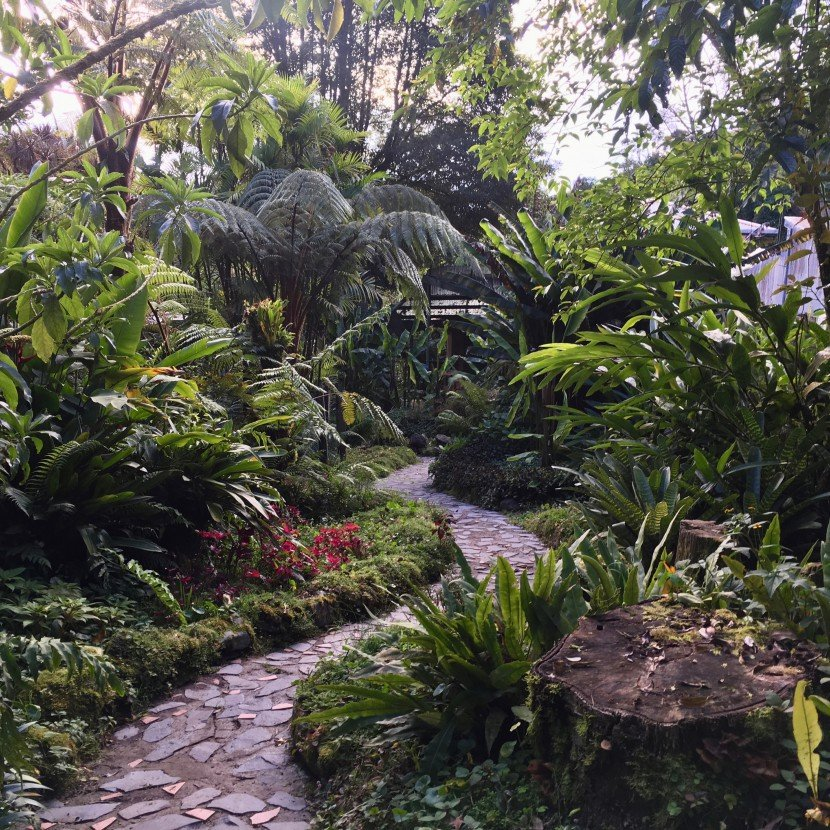 curved tropical garden path with tree ferns and stump