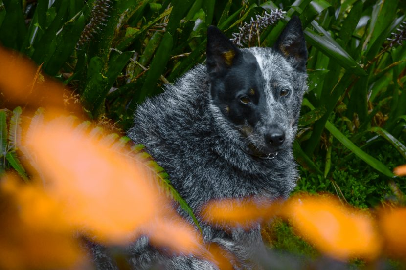 grey dog in the garden flowers