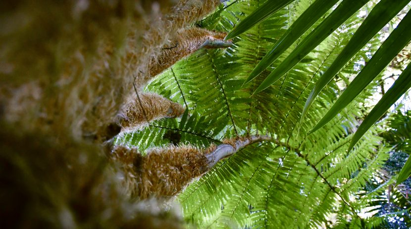 Tree Fern view from below